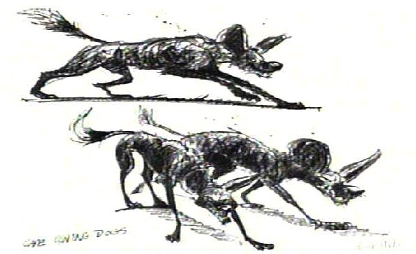 File:Capedogs02.jpg