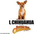 Papi-beverly-hills-chihuahua-movie-16728588-1280-1024