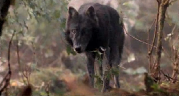 File:Timber Wolf 3.png