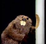 BeaverMuppet