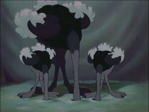 Baby Mine Ostriches