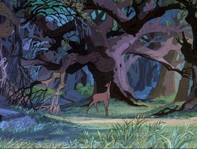 File:Woods 2.jpg