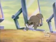 Pintscats36