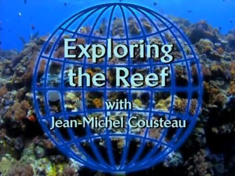 File:Exploring the Reef.JPG