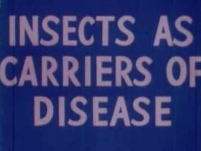 File:1945-insectes-1.jpg