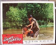 The light in the forest lobby card