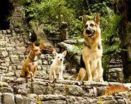 Chloe-Papi-and-Delgado-beverly-hills-chihuahua-movies-and-tv-shows-28230824-1280-1024