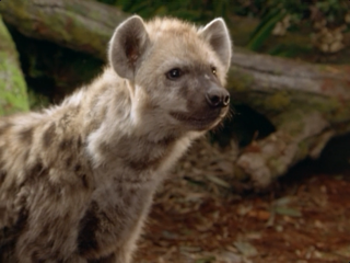File:Tabaqui the Spotted Hyena.PNG