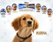 Snow buddies buddha