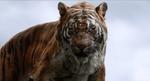 Jungle Book 2016 42