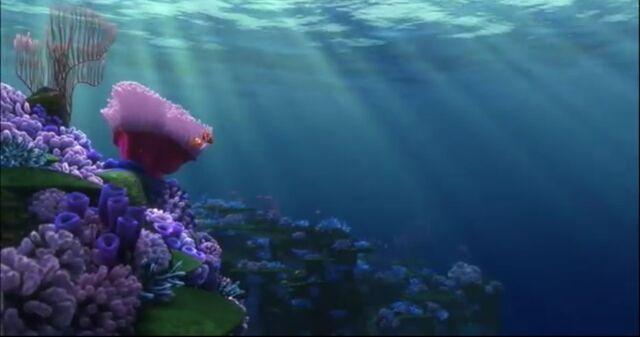 File:Coral Reef.jpg