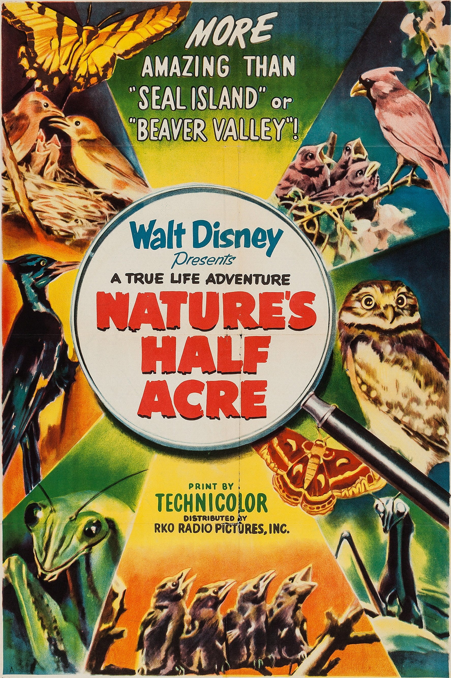 File:Natures half acre.jpg