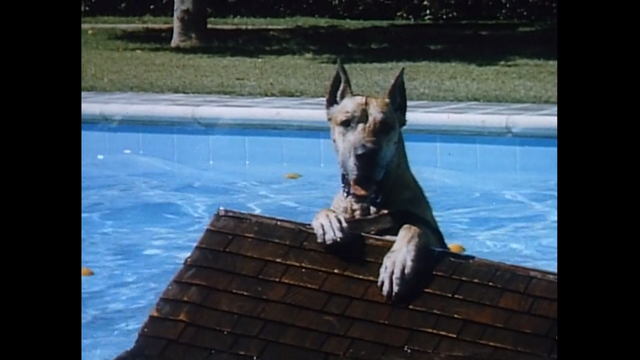 File:Dog in a swimming pool.png