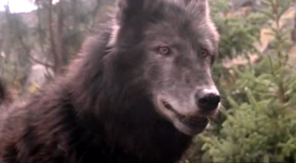 File:Timber Wolf 21.png