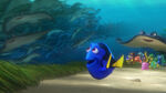 Dory and Class Concept