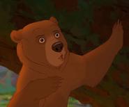 Kenai bear form