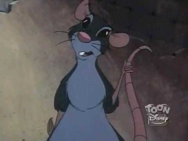File:Jasmine rat.JPG