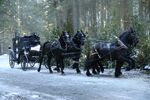 Once Upon a Time - 6x14 - Page 23 - Photography - Carriage