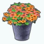CafeRaffle - Chrysanthemums