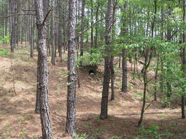 File:Nature Trail 016.jpg