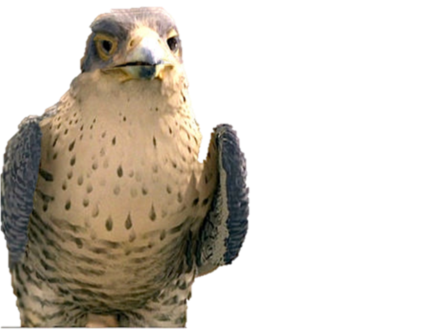 File:Hawk.png