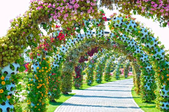 File:Miracle-garden.jpg