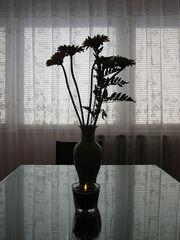 Flowers contre-jour