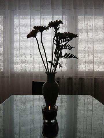 File:Flowers contre-jour.jpg