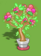 Dizzywood potted blushberry