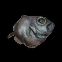 Ob fish01