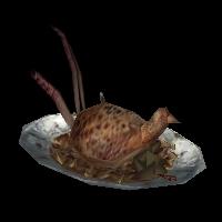 Ob pheasant01.jpg