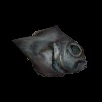 Ob fish01f.jpg