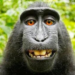 File:85730600 monkey2.jpg