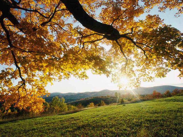 File:Autumn Leaves.jpg
