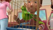 Pet bird doc mcstuffins