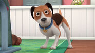 Dog from doc mcstuffins