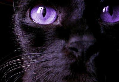 File:Cat zpsabc88b61.JPG