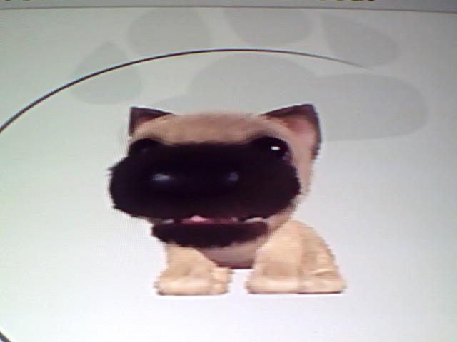 File:38 Cairn Terrier.jpg
