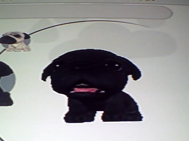File:12 Black Pug.jpg