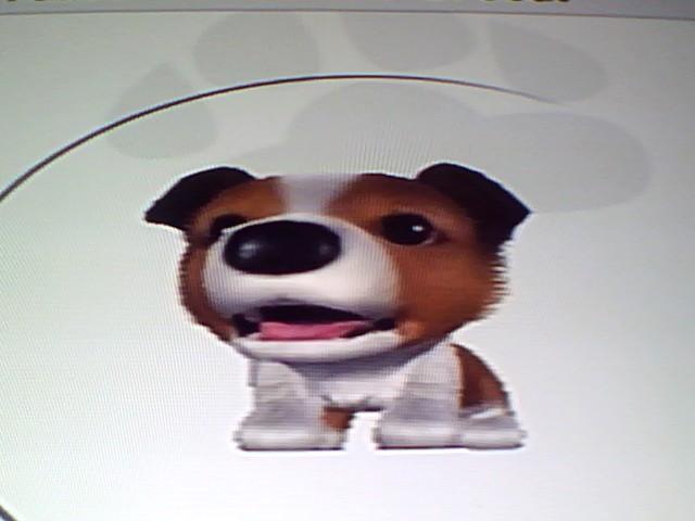 File:18 Brown Shetland Sheepdog.jpg