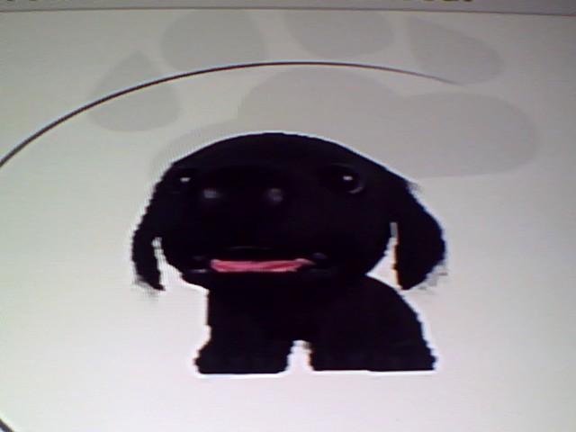 File:48 Black Flat Coated.jpg