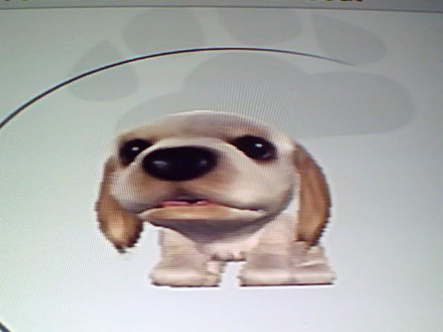 File:15 White American Spaniel.jpg