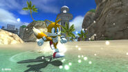 Tails on the beach