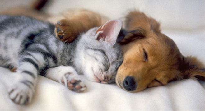 Cuddly Pets: More Than Meets the Eye - About Islam