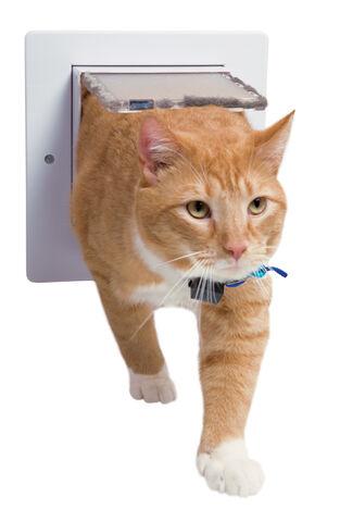 File:Catflap.jpg