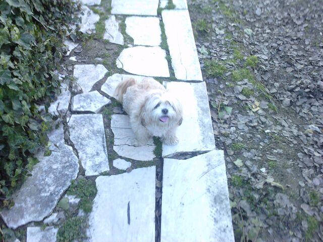 File:Bella at village.jpg