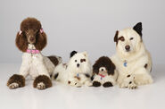 Dogwithablog puppies 2