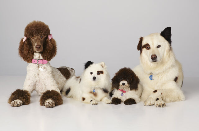 File:Dogwithablog puppies 2.jpg