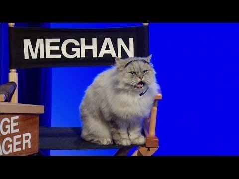 File:Meghan the cat.jpg