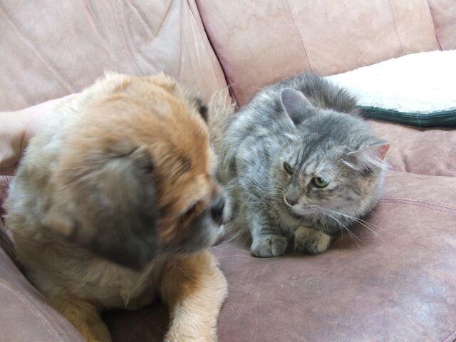 File:Ollie&Mew01.JPG